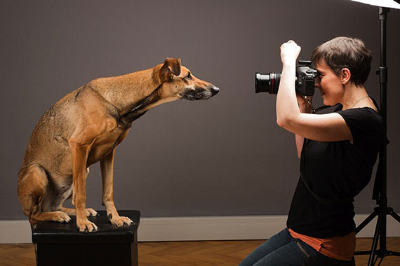 Pet photography is gaining popularity